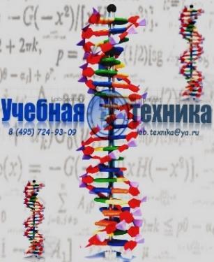 ДНК (DNK)