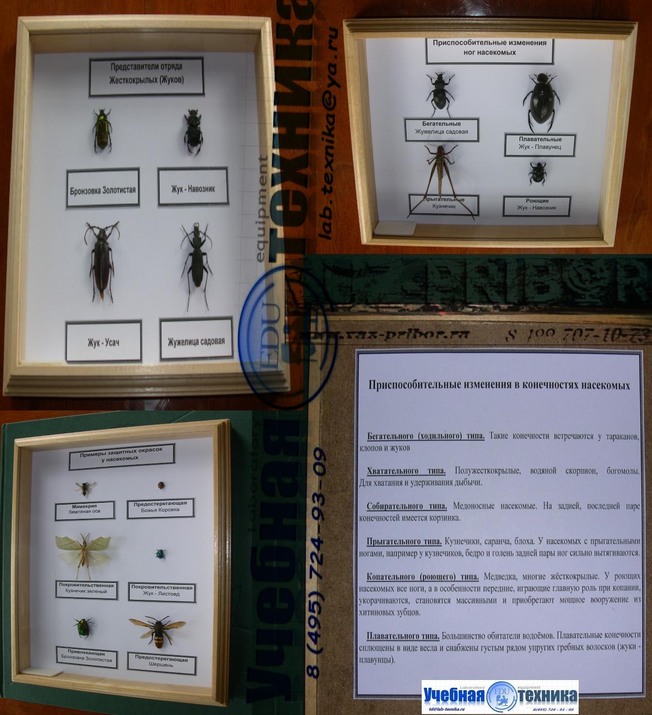 бабочки, жуки, биология, школа