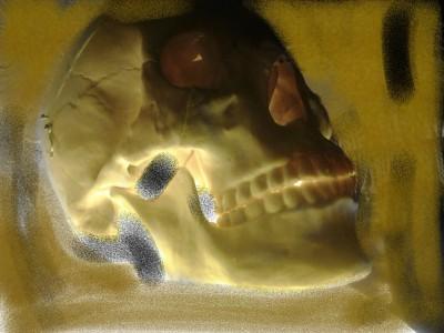 череп, человек, биолония