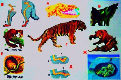 зоология, школа, млекопитающие